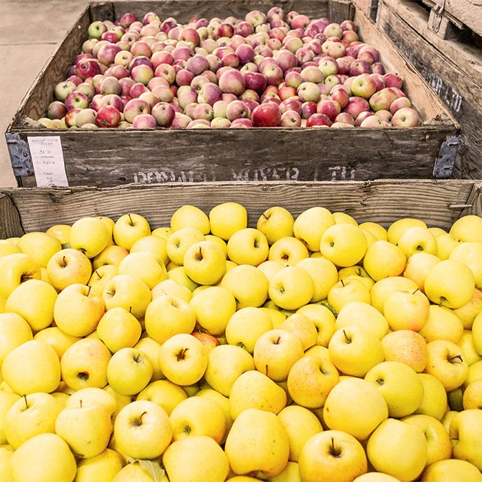Fresh apples in crates waiting to be pressed
